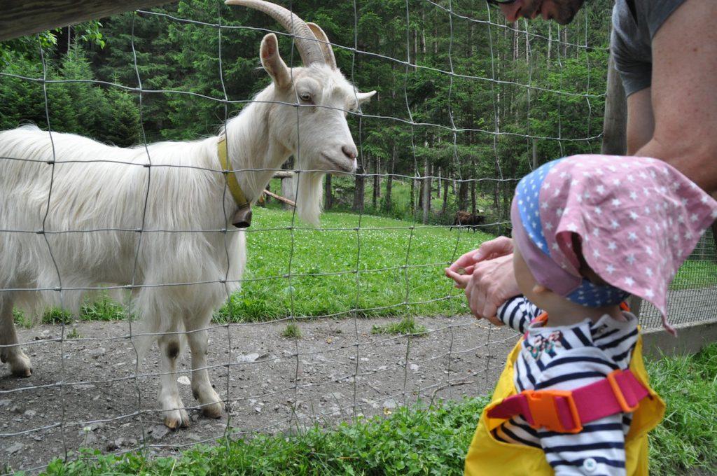 Die Top 11 Ausflugsziele in Zell am See/Kaprun mit Kindern: Wildpark Ferleiten