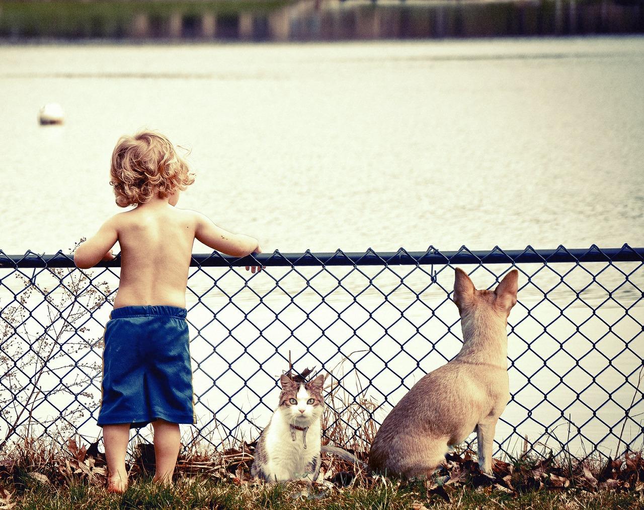 Kinder und Haustiere: Tipps und Tricks