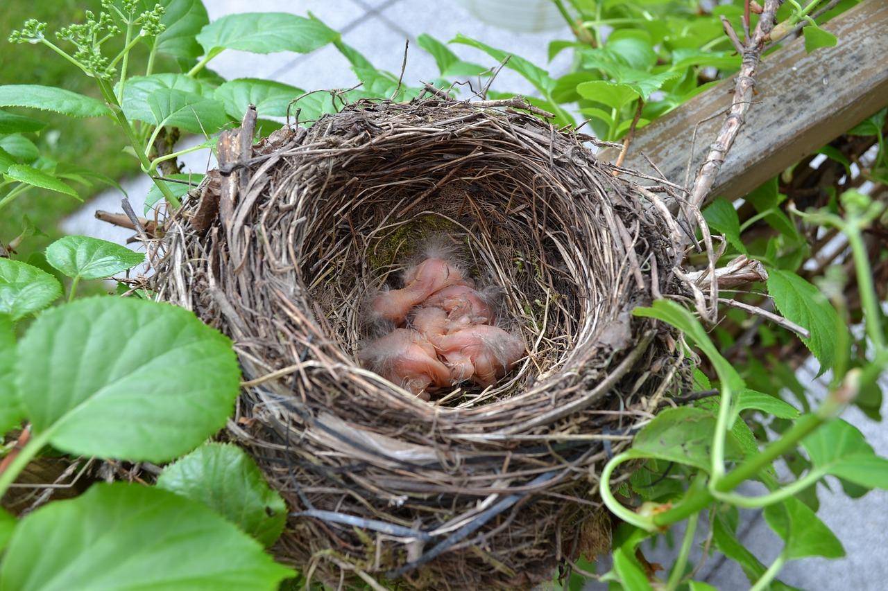 Vogelnest Nestbauhilfe Natur Kinder